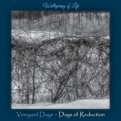 Days of Reduction tangled vine - med