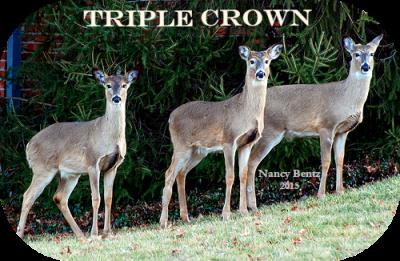 Triplets II