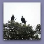 Two Eagles II