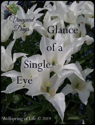 Vineyard Days white tulips
