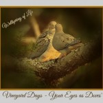 Vineyard Days – Your Eyes as Doves'