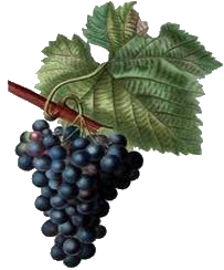 grapes by Gretchen