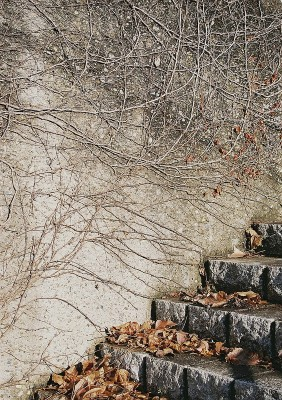 vined wall & leafy steps - med